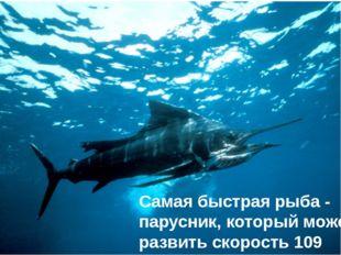 Самая быстрая рыба - парусник, который может развить скорость 109 км/ч.