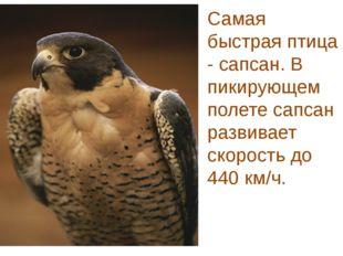 Самая быстрая птица - сапсан. В пикирующем полете сапсан развивает скорость д