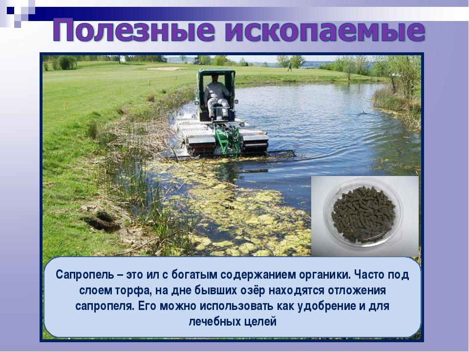 Сапропель – это ил с богатым содержанием органики. Часто под слоем торфа, на...