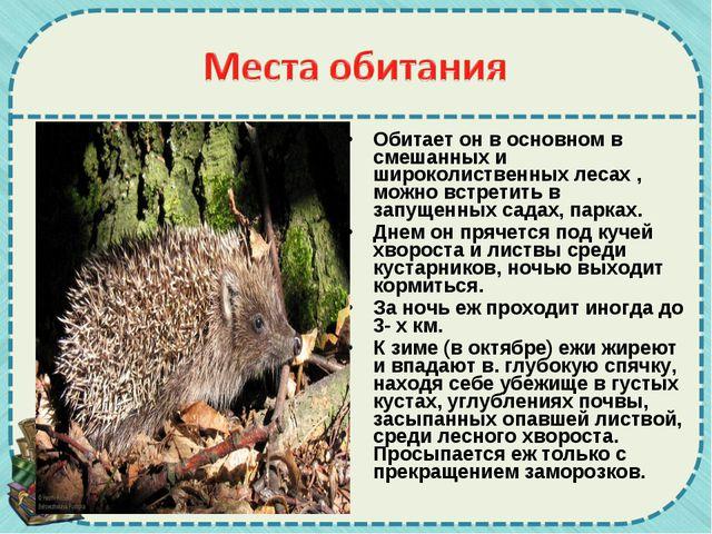 Обитает он в основном в смешанных и широколиственных лесах , можно встретить...