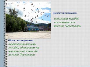 Объект исследования: жизнедеятельность голубей, обитающих на центральной площ