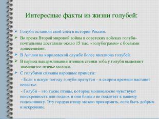 Интересные факты из жизни голубей: Голуби оставили свой след в истории России