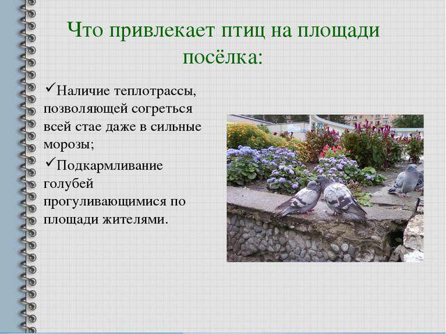 Что привлекает птиц на площади посёлка: Наличие теплотрассы, позволяющей согр...