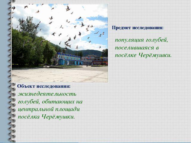 Объект исследования: жизнедеятельность голубей, обитающих на центральной площ...