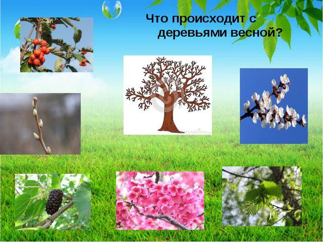 Что происходит с деревьями весной?