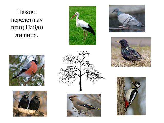 Назови перелетных птиц.Найди лишних.