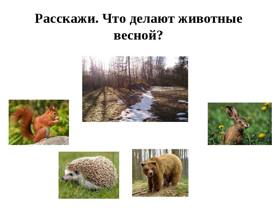 Расскажи. Что делают животные весной?