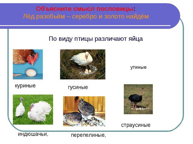 Объясните смысл пословицы: Лёд разобьём – серебро и золото найдём По виду пти...