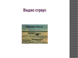 Видео страус