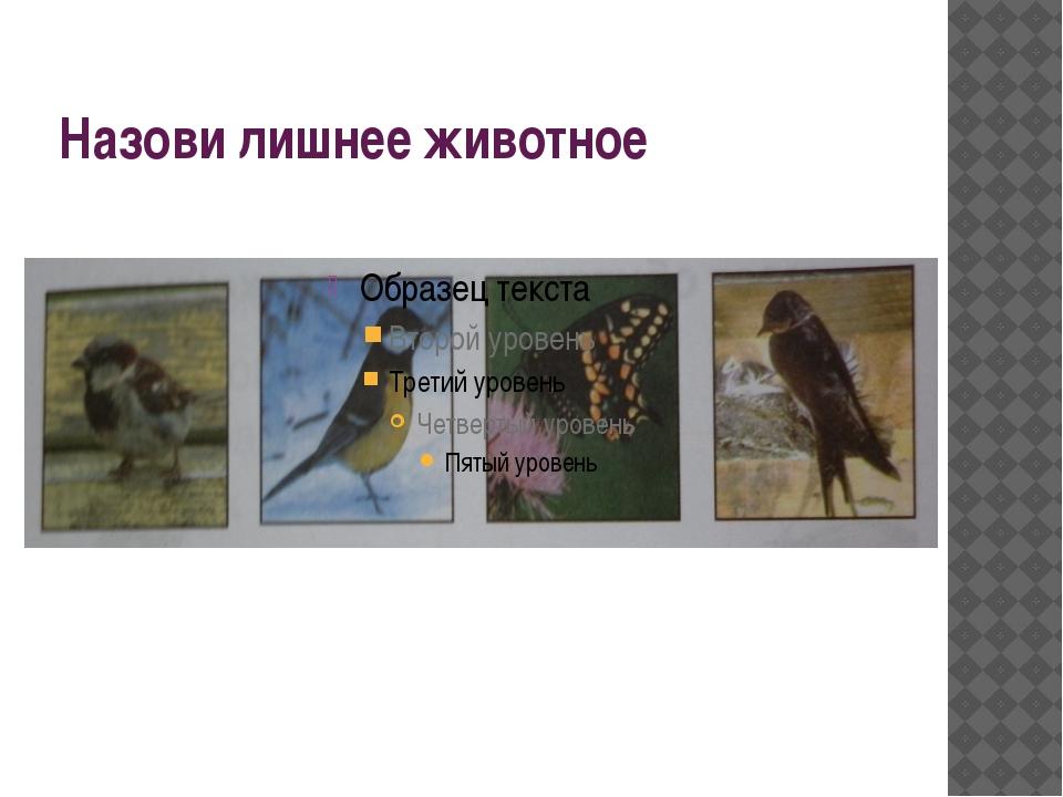 Назови лишнее животное
