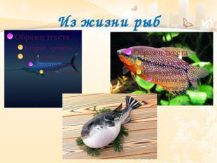 Из жизни рыб