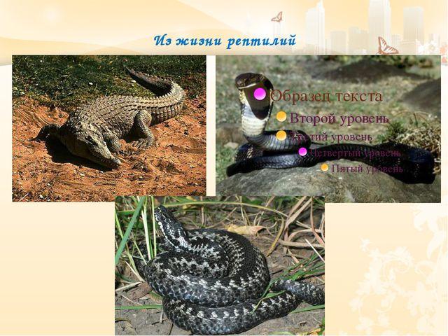 Из жизни рептилий