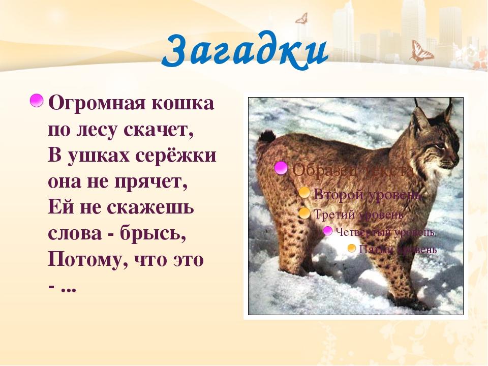 Загадки Огромная кошка по лесу скачет, В ушках серёжки она не прячет, Ей не с...