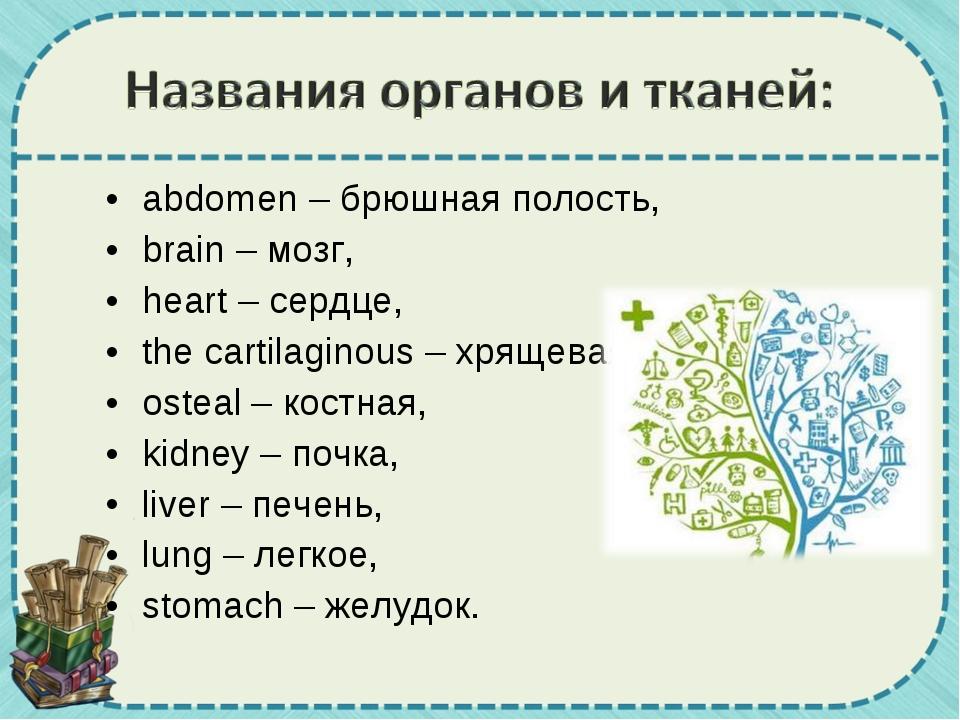 abdomen – брюшная полость, brain – мозг, heart – сердце, the cartilaginous –...