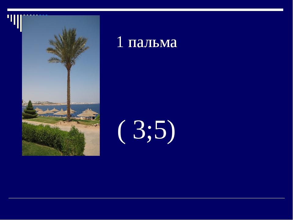 1 пальма ( 3;5)