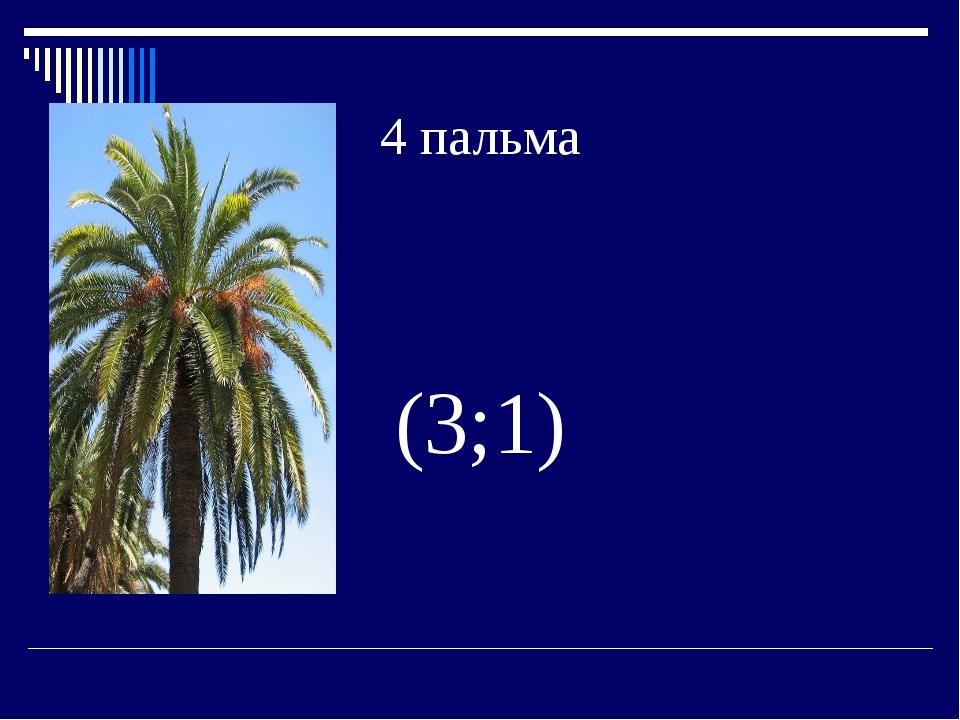 4 пальма (3;1)