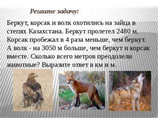 Решите задачу: Беркут, корсак и волк охотились на зайца в степях Казахстана.