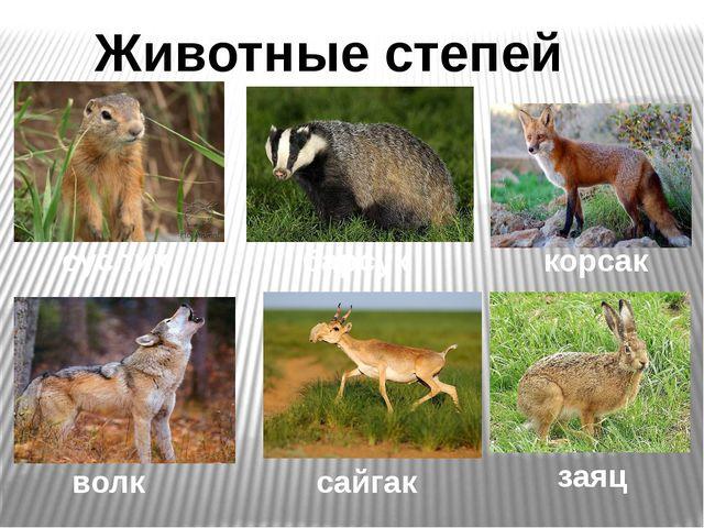 Животные степей суслик корсак волк сайгак заяц барсук