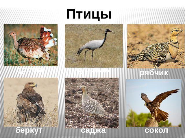 Птицы степей дрофа журавль рябчик беркут саджа сокол