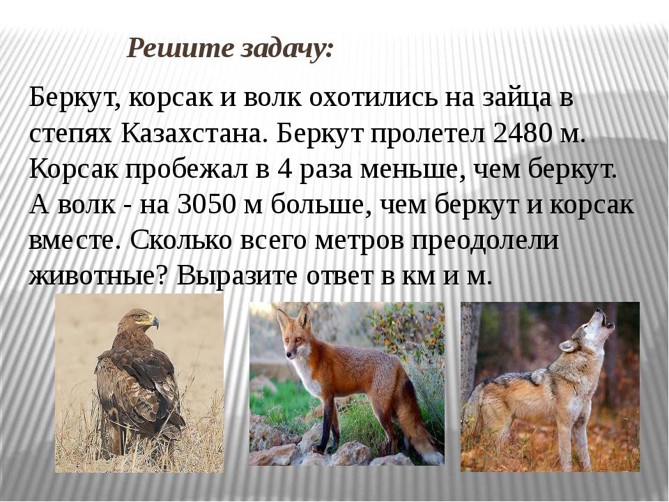 Решите задачу: Беркут, корсак и волк охотились на зайца в степях Казахстана....