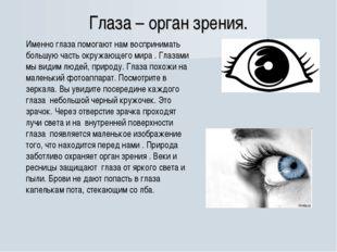 Глаза – орган зрения. Именно глаза помогают нам воспринимать большую часть ок