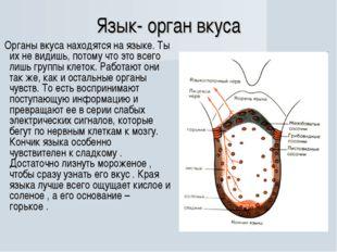 Язык- орган вкуса Органы вкуса находятся на языке. Ты их не видишь, потому чт