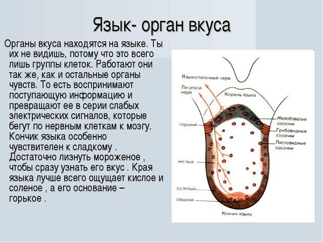 Язык- орган вкуса Органы вкуса находятся на языке. Ты их не видишь, потому чт...