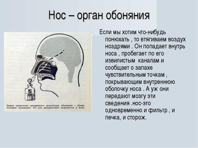 Нос – орган обоняния Если мы хотим что-нибудь понюхать , то втягиваем воздух...