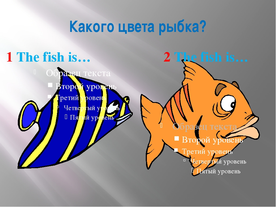 Какого цвета рыбка? 1 The fish is… 2 The fish is…