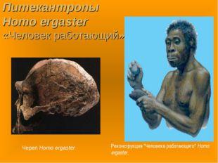 Питекантропы Homo ergaster «Человек работающий» Череп Homo ergaster Реконстру