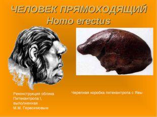 ЧЕЛОВЕК ПРЯМОХОДЯЩИЙ Homo erectus Реконструкция облика Питекантропа I, выполн