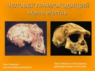 ЧЕЛОВЕК ПРЯМОХОДЯЩИЙ Homo erectus Череп Юньксянь– один из китайских архантроп