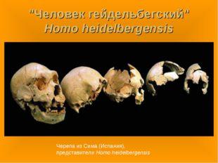 """""""Человек гейдельбегский"""" Homo heidelbergensis Черепа из Сима (Испания), предс"""