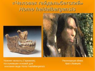 «Человек гейдельбегский» Homo heidelbergensis Нижняя челюсть (Германия), посл