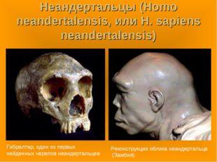 Неандертальцы (Homo neandertalensis, или H. sapiens neandertalensis) Гибралта