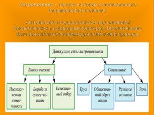 Антропогенез – процесс историко-эволюционного формирования человека. Антропог
