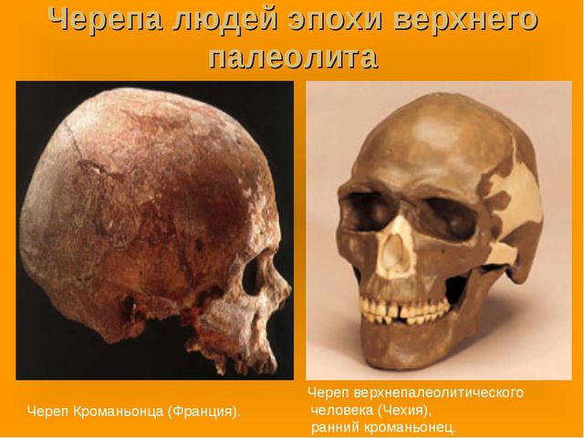 Черепа людей эпохи верхнего палеолита Череп Кроманьонца (Франция). Череп верх...