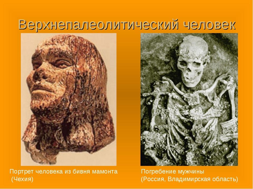 Верхнепалеолитический человек Портрет человека из бивня мамонта (Чехия) Погре...