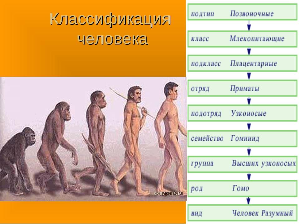 Классификация человека
