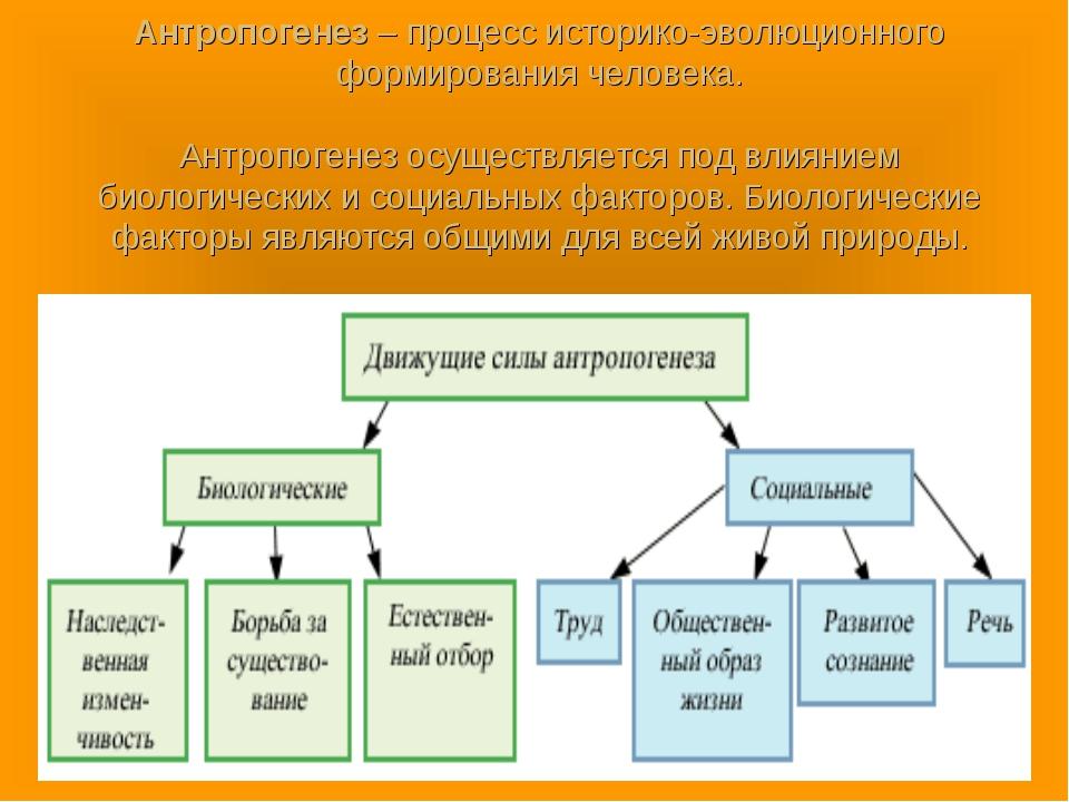 Антропогенез – процесс историко-эволюционного формирования человека. Антропог...