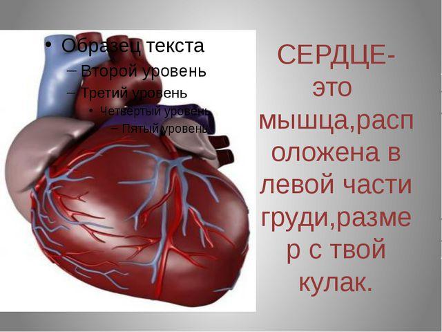 СЕРДЦЕ-это мышца,расположена в левой части груди,размер с твой кулак.