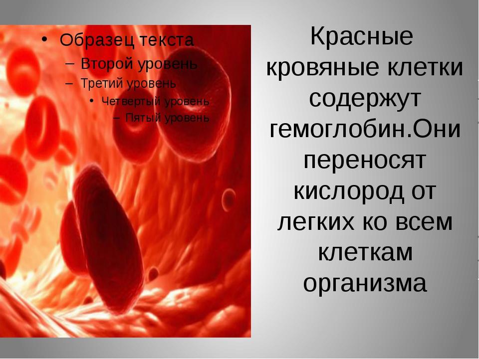 Красные кровяные клетки содержут гемоглобин.Они переносят кислород от легких...