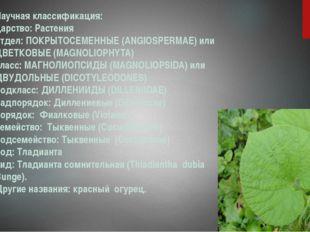 Научная классификация: царство: Растения отдел: ПОКРЫТОСЕМЕННЫЕ (ANGIOSPERMAE