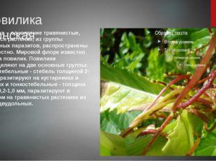 Повилика японская Повилика – однолетние травянистые, вьющиеся растения, из г