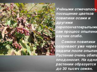 Учёными отмечалось посещение цветков повилики осами и другими перепончатокры