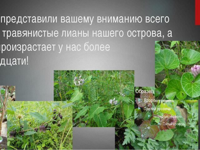 Мы представили вашему вниманию всего две травянистые лианы нашего острова, а...