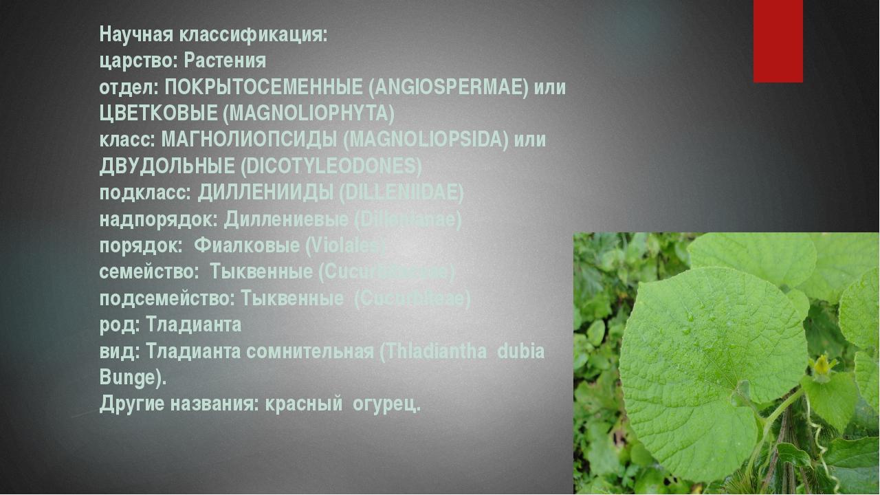Научная классификация: царство: Растения отдел: ПОКРЫТОСЕМЕННЫЕ (ANGIOSPERMAE...