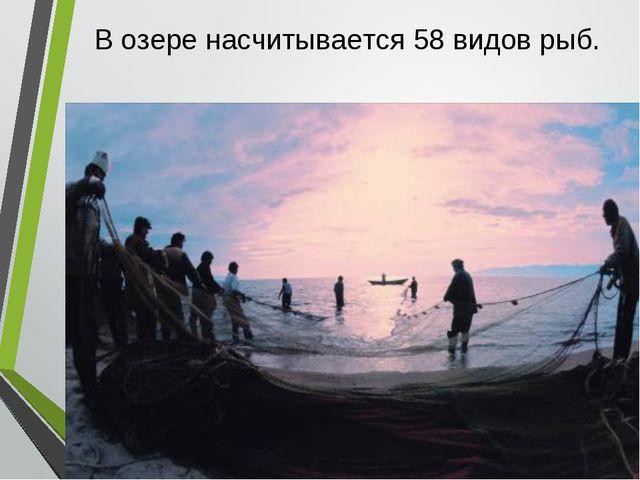 . * В озере насчитывается 58 видов рыб.