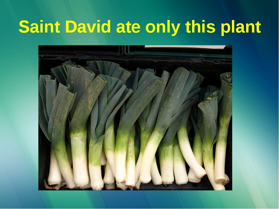 Saint David ate only this plant