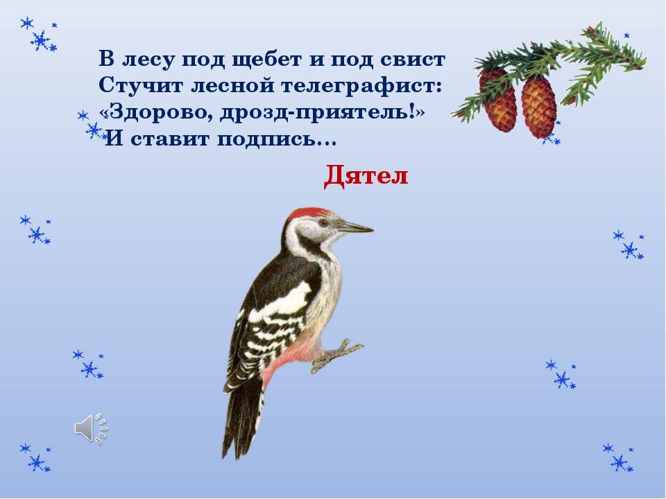 В лесу под щебет и под свист Стучит лесной телеграфист: «Здорово, дрозд-прият...